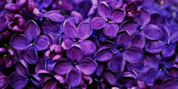 Floral para ansiedade funciona?
