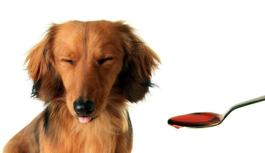simpatia para curar cachorro doente