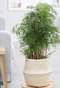 plantas positivas do feng shui