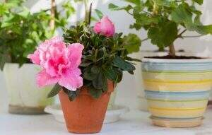 plantas positivas feng shui