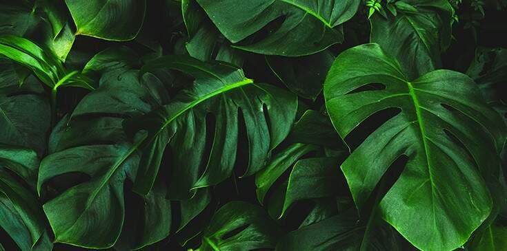 sonhar com folhas