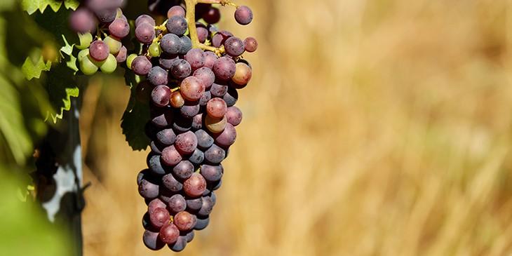 simpatia da uva para 2021