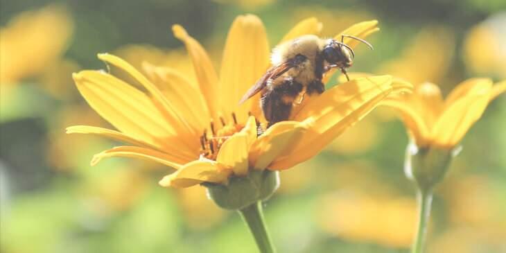 abelha significado espiritual
