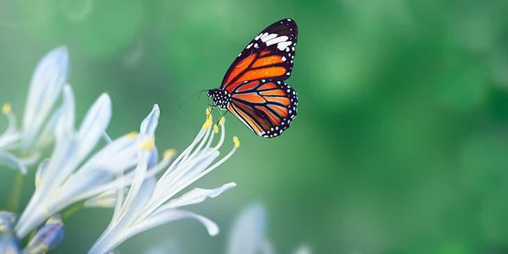 borboleta significado espiritual