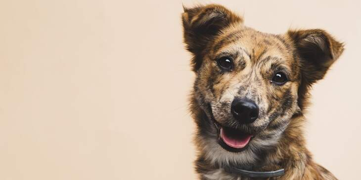 cachorro-significado-espiritual