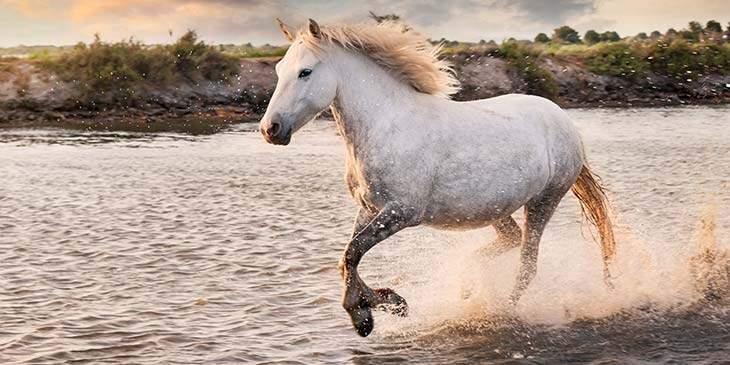 significado espiritual do cavalo branco
