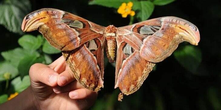 sonhar com mariposa