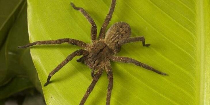 Significado espiritual da aranha